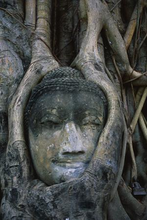 Buddha Head Surrounded by Tree Roots by Macduff Everton