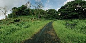 Dateline Drive on Taveuni Island by Macduff Everton