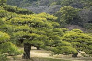 Evergreen Trees in Ritsurin-Koen, One of Japan's Most Beautiful Gardens by Macduff Everton