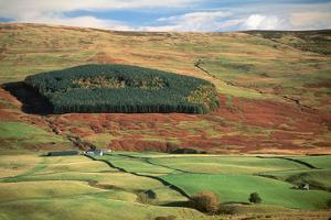 Hillside Farm and Forest by Macduff Everton