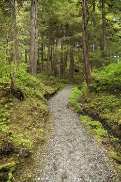 Path Inside Tongass National Forest by Macduff Everton