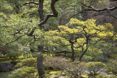 Trees and Shrubs at the Well Tended Japanese Garden at Ginkaku-Ji by Macduff Everton