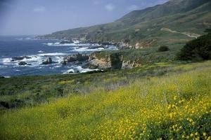 Wildflowers in Springtime Along the Big Sur Coast by Macduff Everton