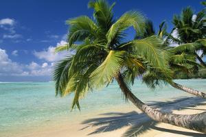 Madagascar Sandy Beach and Palm Trees