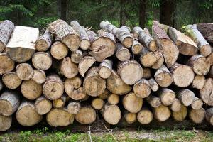 Pile of Wood Logs Ready for Winter by Madredus