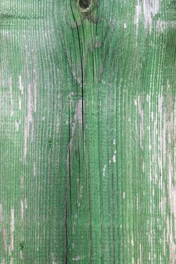 The Green Wood Texture with Natural Patterns by Madredus