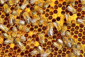 Working Bees on Honeycells by mady70