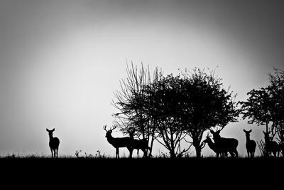 An Image Of Some Deer In The Morning Mist
