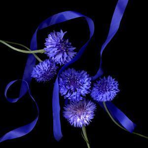 cornflowers by Magda Indigo