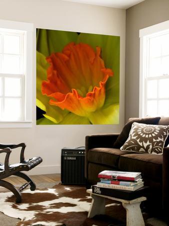 Orange Dafodil by Magda Indigo