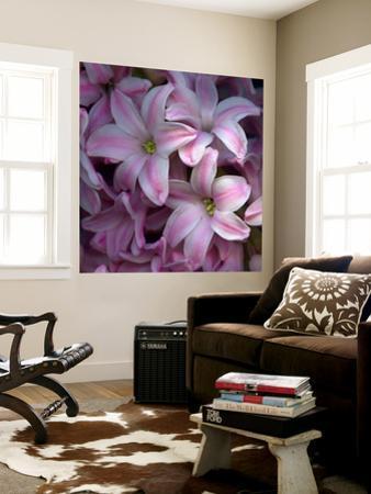 Pink Hyacynth Petals by Magda Indigo