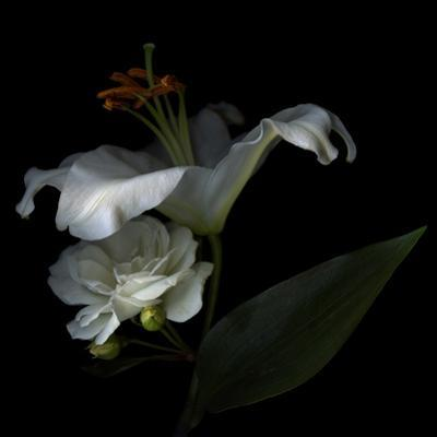White Rose and White Lily