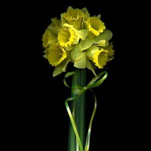Yellow Daffodil Bouquet by Magda Indigo