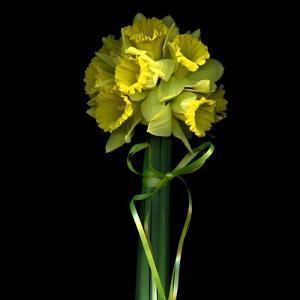 Yellow Daffodil Bouquet by Magda Indigo