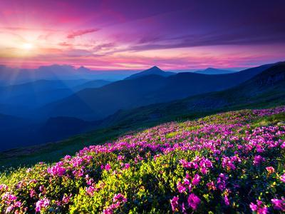 https://imgc.allpostersimages.com/img/posters/magic-pink-rhododendron-flowers-on-summer-mountain-dramatic-overcast-sky-carpathian-ukraine-eur_u-L-Q105LBL0.jpg?artPerspective=n