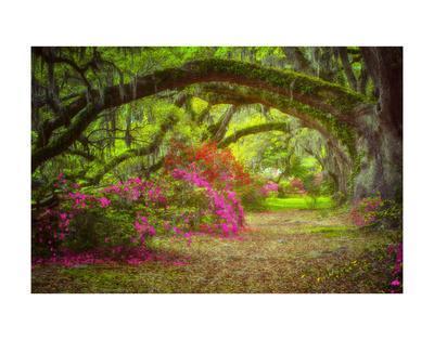 https://imgc.allpostersimages.com/img/posters/magnolia-gardens_u-L-F8UPZ60.jpg?p=0
