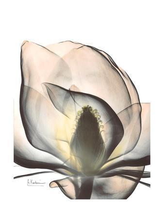 https://imgc.allpostersimages.com/img/posters/magnolia-portrait_u-L-PYK0R90.jpg?artPerspective=n
