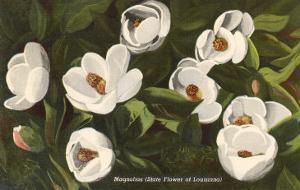 Magnolia, State Flower of Louisiana