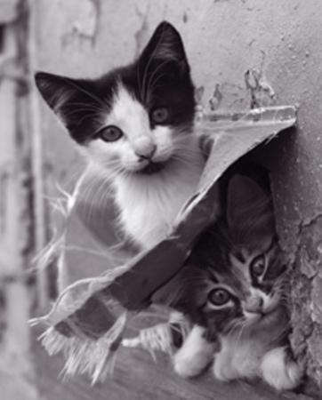 Cache-cache Chatons by Makeyeva