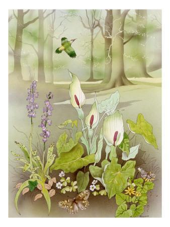 Woodland Scene with Green Woodpecker