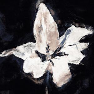 Orchid Sketch by Malcolm Sanders