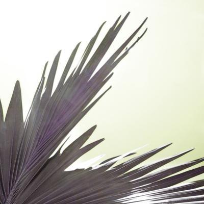 Tropica Avalon by Malcolm Sanders