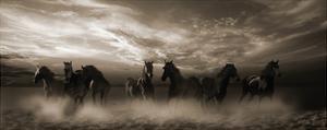 Wild Stampede by Malcolm Sanders