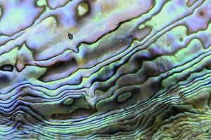 Paua (Haliotis iris) interior layer of shell, close-up of iridescent nacre or mother of pearl by Malcolm Schuyl