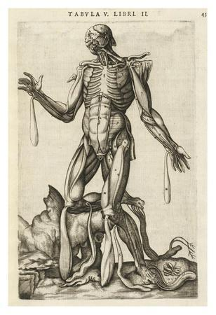 https://imgc.allpostersimages.com/img/posters/male-figure-with-muscles-and-skeleton_u-L-F8HZBM0.jpg?artPerspective=n