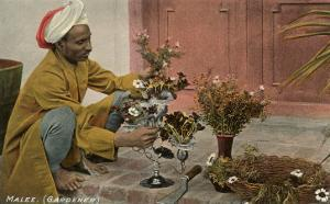 Malee, North African Gardener with Bouquets