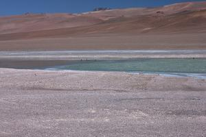 Altiplano, Chile, in the Atacama Desert Is This Green Lagoon by Mallorie Ostrowitz