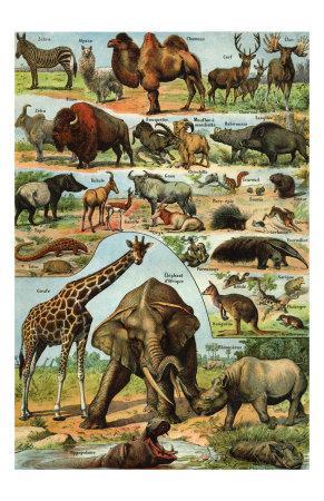 https://imgc.allpostersimages.com/img/posters/mamiferes-ii_u-L-F2HVG60.jpg?artPerspective=n