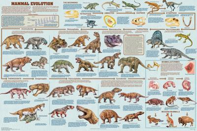 Mammal Evolution
