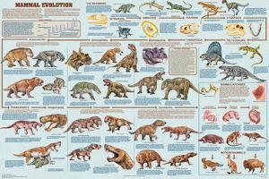 Mammal Evolution