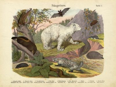 Mammals, C.1860