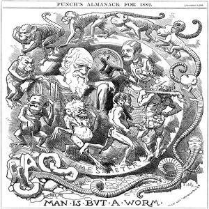 Man Is But a Worm, Cartoon from Punch Showing Evolution from Worm to Man, 1881