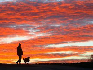 Man Walks His Dog under a Red Sky in the Afternoon Hours in Frankfurt, Central Germany