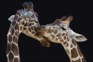 The Kiss by Manfred Foeger