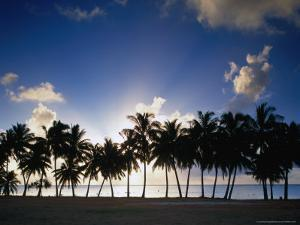 Sun Setting Behind Palm Tree Lined Shore of West Coast, Cook Islands by Manfred Gottschalk