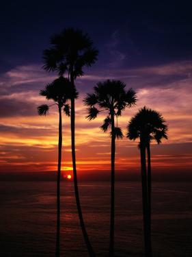 Sunset and Silhouetted Palm Trees at Phrom Thep Cape, Thailand by Manfred Gottschalk