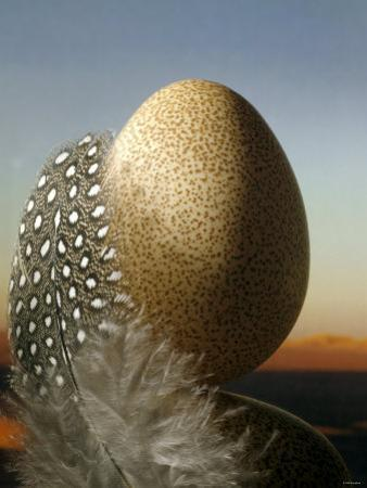 A Guinea Fowl Egg and Feather