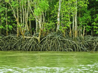https://imgc.allpostersimages.com/img/posters/mangrove-tour-langkawi-island-malaysia-southeast-asia-asia_u-L-P91PJZ0.jpg?p=0