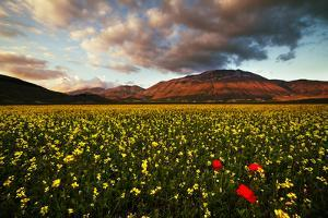 Meadow by Manuelo Bececco global nature photographer