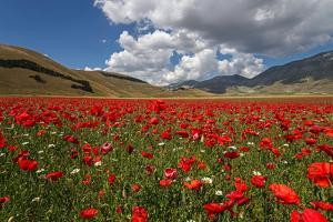 Poppies by Manuelo Bececco global nature photographer