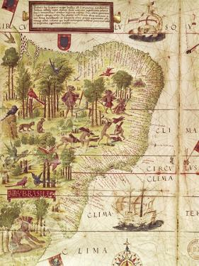 Map of Brazil, from Miller Atlas by Pedro and Jorge Reinel, Lopo Homen