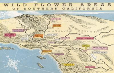 Map of Southern California Wild Flower Areas