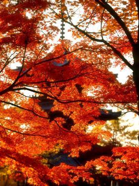Maple Leaves and Shinnyo-Do Temple