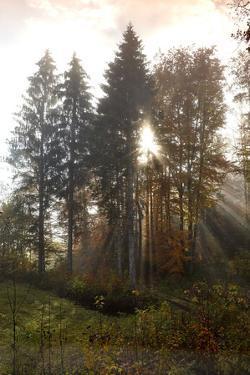 Wood in the Fog by Marc Gilsdorf