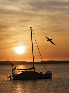 A Silhouetted Sailboat at Sunset and Flying Brown Pelican by Marc Moritsch
