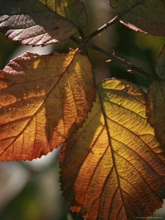 Close View of Dew on Autumn Foliage by Marc Moritsch